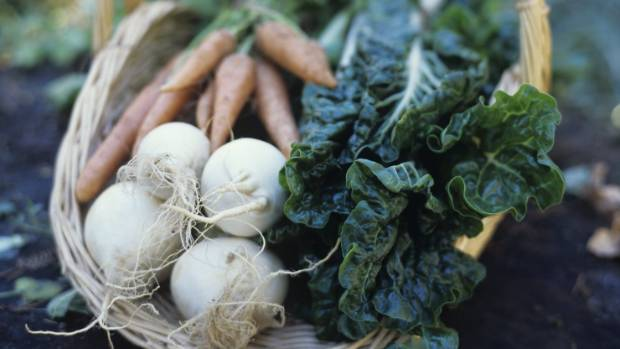 Baby turnips are crisp, crunchy and delicious.