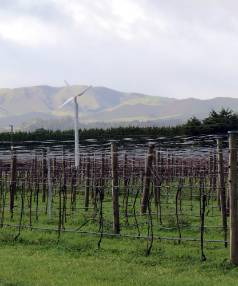 BLEAK VINES: A different face of Martinborough with empty vines and a wintery landscape.