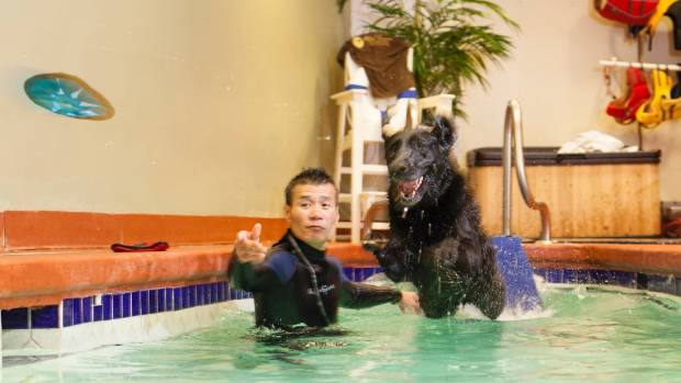 Tom Baldwin guides Al, a 9-year-old black Lab, through pool exercises at the 240-room Olde Towne Pet Resort in Springfield.