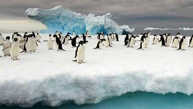 """The motivations of other countries and their new found interest in Antarctica have been labelled """"less clear"""" by the ..."""