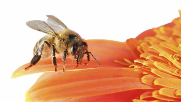NZ Gardener's Plan Bee has lots of activities and projects to help you help the bees.