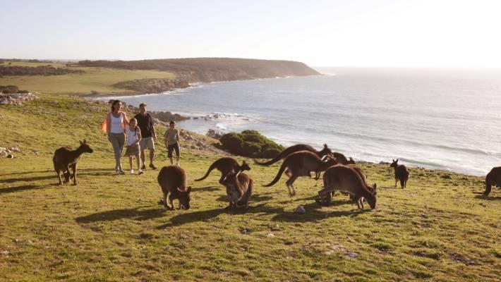 Qantas To Fly To Kangaroo Island Australia S Answer To The