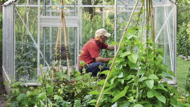 Edible plants often do well in a glasshouse.