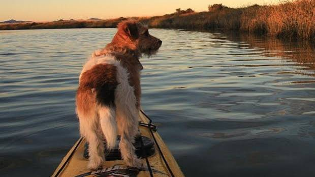 TOUR LEADER: Vix tries to avoid being dog-napped during a kayaking trip.