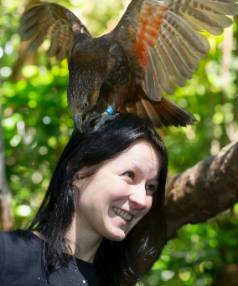 NUT CASE: Zealandia kaka, including 1-year-old Amy, eagerly await the challenges set for them by PhD student Julia ...
