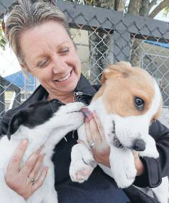 cute pups and kittens for life not christmas stuff co nz