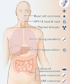 Cancers due to bad luck plus environmental and inherited factors.