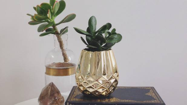 Easy stylish ways to add plants to your home - Cool looking house plants ...