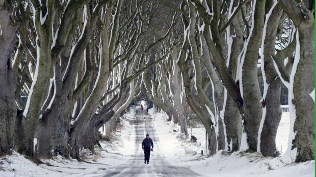 A man walks along the famous Dark Hedges avenue of trees in Antrim, Northern Ireland.