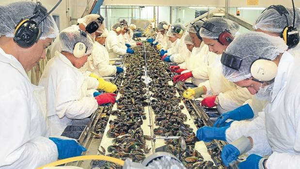 Workers processing mussels at Kono in Riverlands, Blenheim.