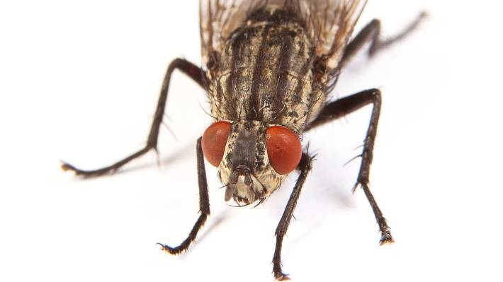 How To Keep Flies Out Of Your Home Stuff Co Nz