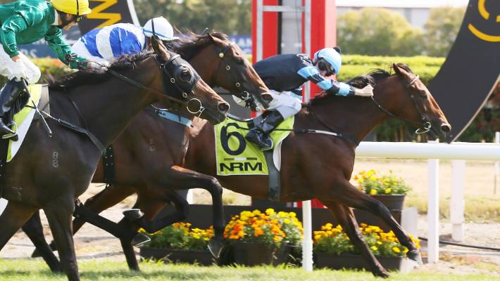 Soriano holds on to win Herbie Dyke Stakes | Stuff.co.nz