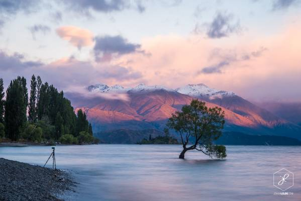 """""""The world famous Willow tree of Wanaka. This is one of the most photographed trees in the world, and now that I'm based ..."""
