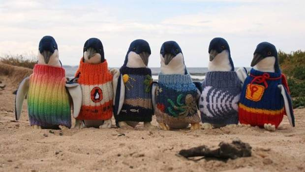 SOFTIES: Soft toy penguins show off some of the best sweater designs the Phillip Island team have received. Which is ...