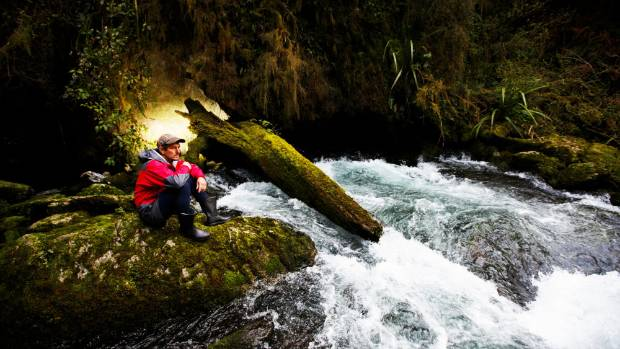 River start: Caver Kieran McKay at the entrance to the Nettlebed system where the Pearse River emerges from   the Mt ...
