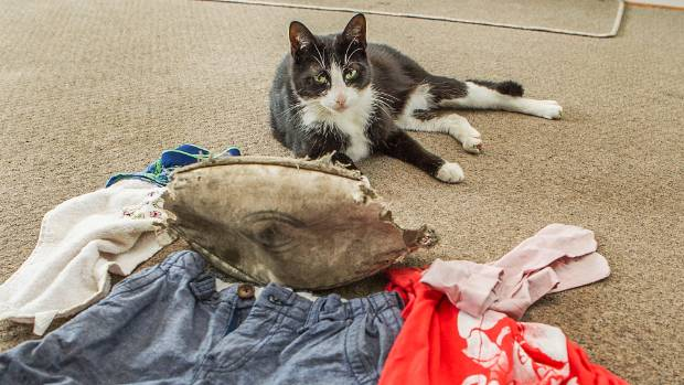 THIEF: Charlie the cat pictured with some of his stolen loot.