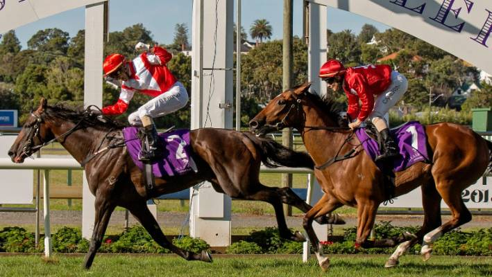 Rosehill Guineas more than a two-horse race as Kiwi duo look