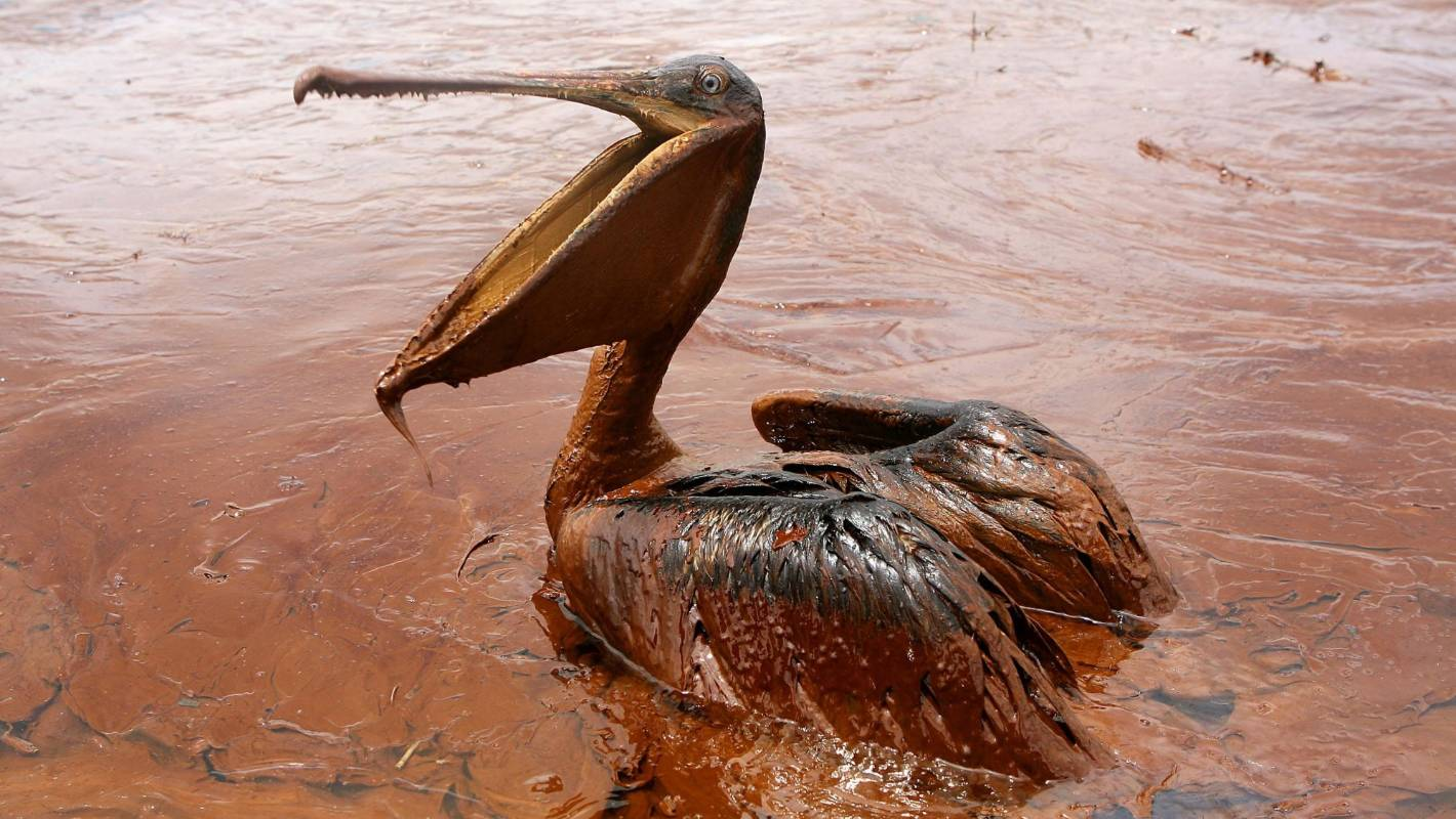 5 environmental consequences of oil spills thoughtco - 990×664
