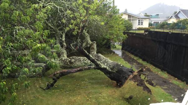As the remnants of Cyclone Pam hit Gisborne, a tree is uprooted - narrowly missing a house.