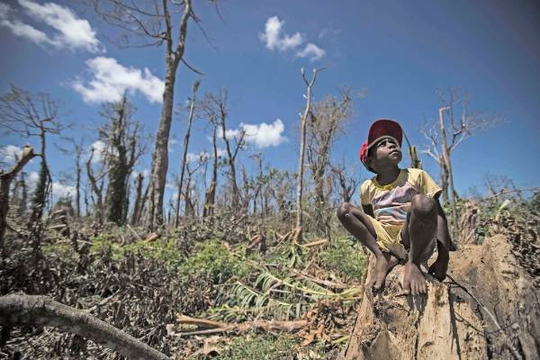 A boy sits among a destroyed forest on the north of the island of Efate.