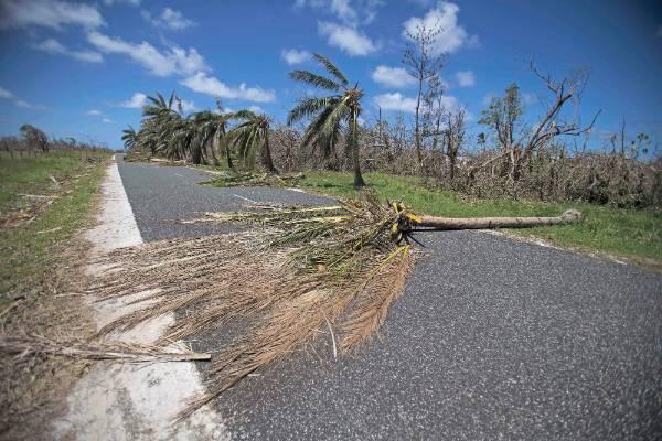 A damaged tree lies across the roads in Vanuatu.