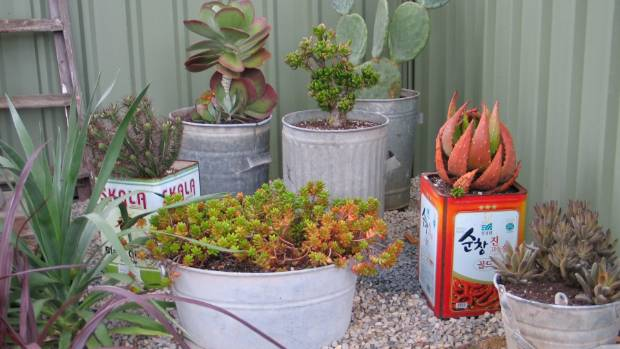 Potted plants: what you need to know