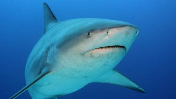 Some Stewart Island residents want shark cage diving banned.