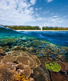 Lady Elliott Island is the southernmost island of the Great Barrier Reef.