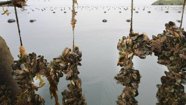Mussels have a role in cleaning dirty waters.