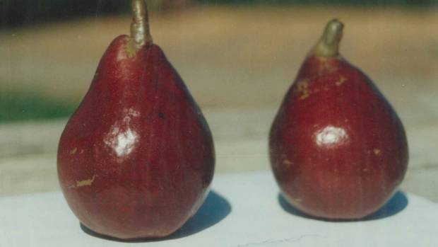 How To Grow The Perfect Pear Stuff Co Nz