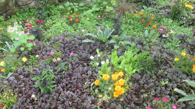 The best plants for ground cover for Low growing landscape plants