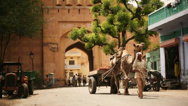 A man leads his camel and cart through the street at the base of Jaipur's Amber Fort.