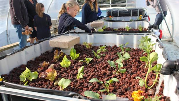 Wairakei Primary School Student Anna Mounsey, 8, enjoyed checking out the completed aquaponics unit at the school, which ...