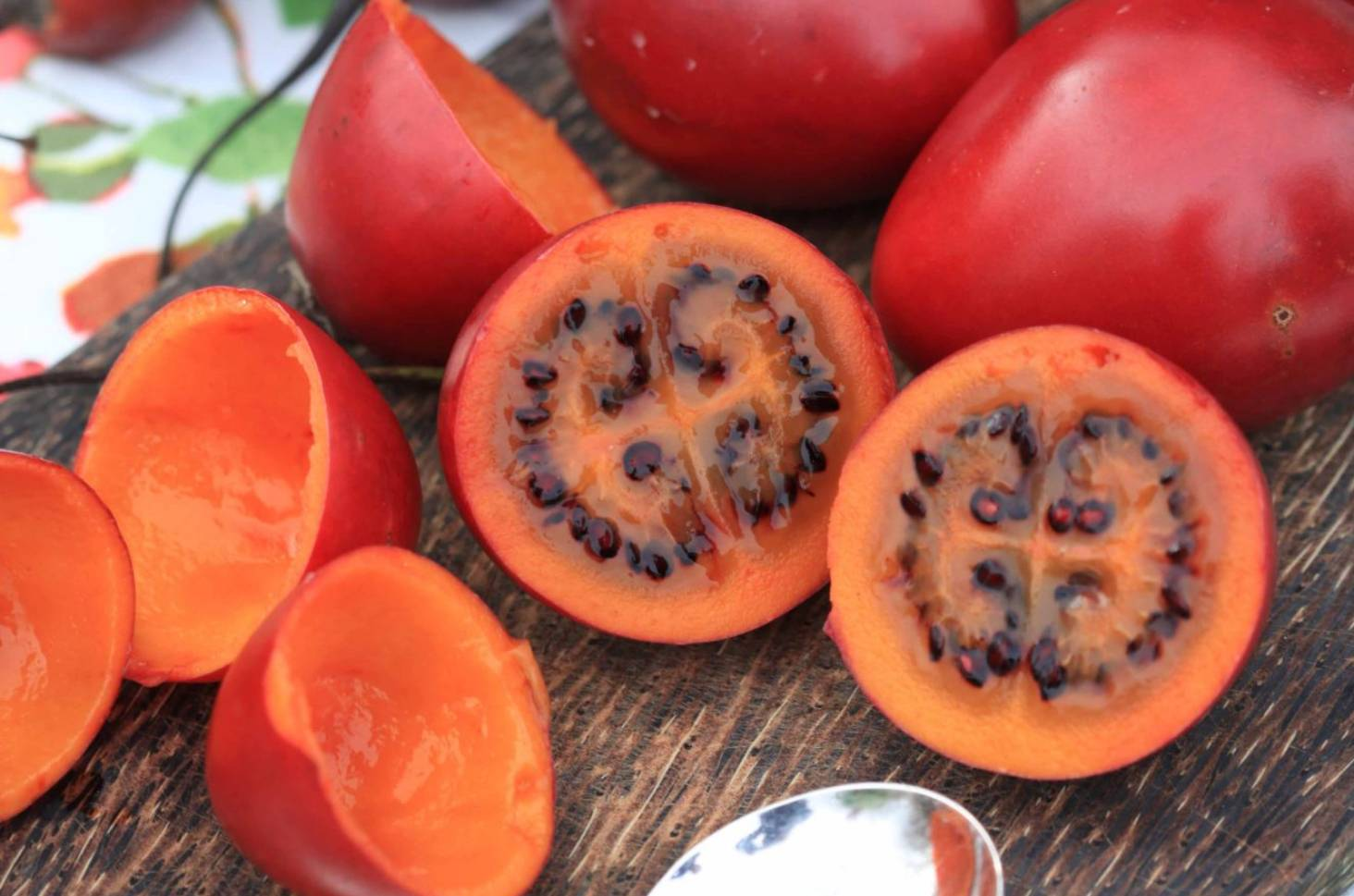 How To Grow Tamarillos House Wiring New Zealand