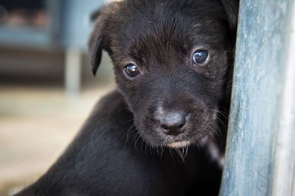 This young pup at the Hamilton SPCA is now legally recognised as having feelings.