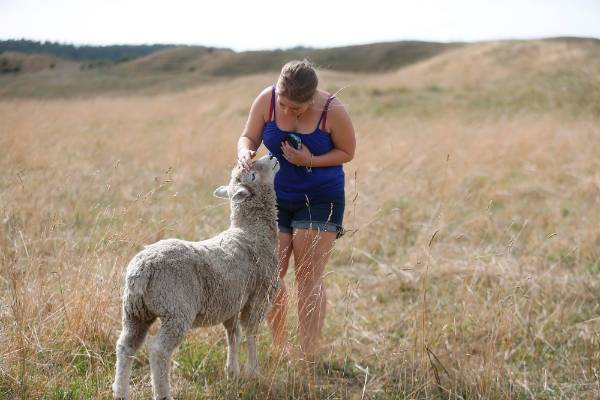 Richard, the pet sheep from Otaki that thinks it's a dog, seems to feel pretty good about this situation.