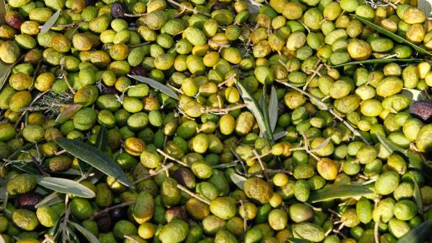 Olive oil production and sales is one of the fastest-growing global industries.
