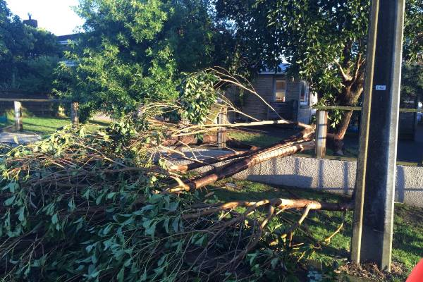 The tornado ripped off roofs, downed trees and blew down fences.