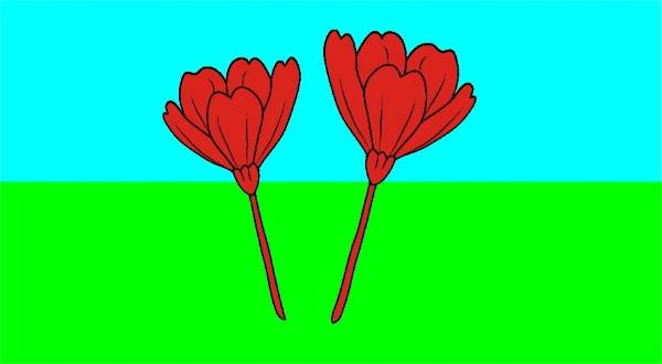 "Lindsay Smith, from Canterbury, designed her flag ""tall poppies"" because it ""represents the majority of New Zealanders""."