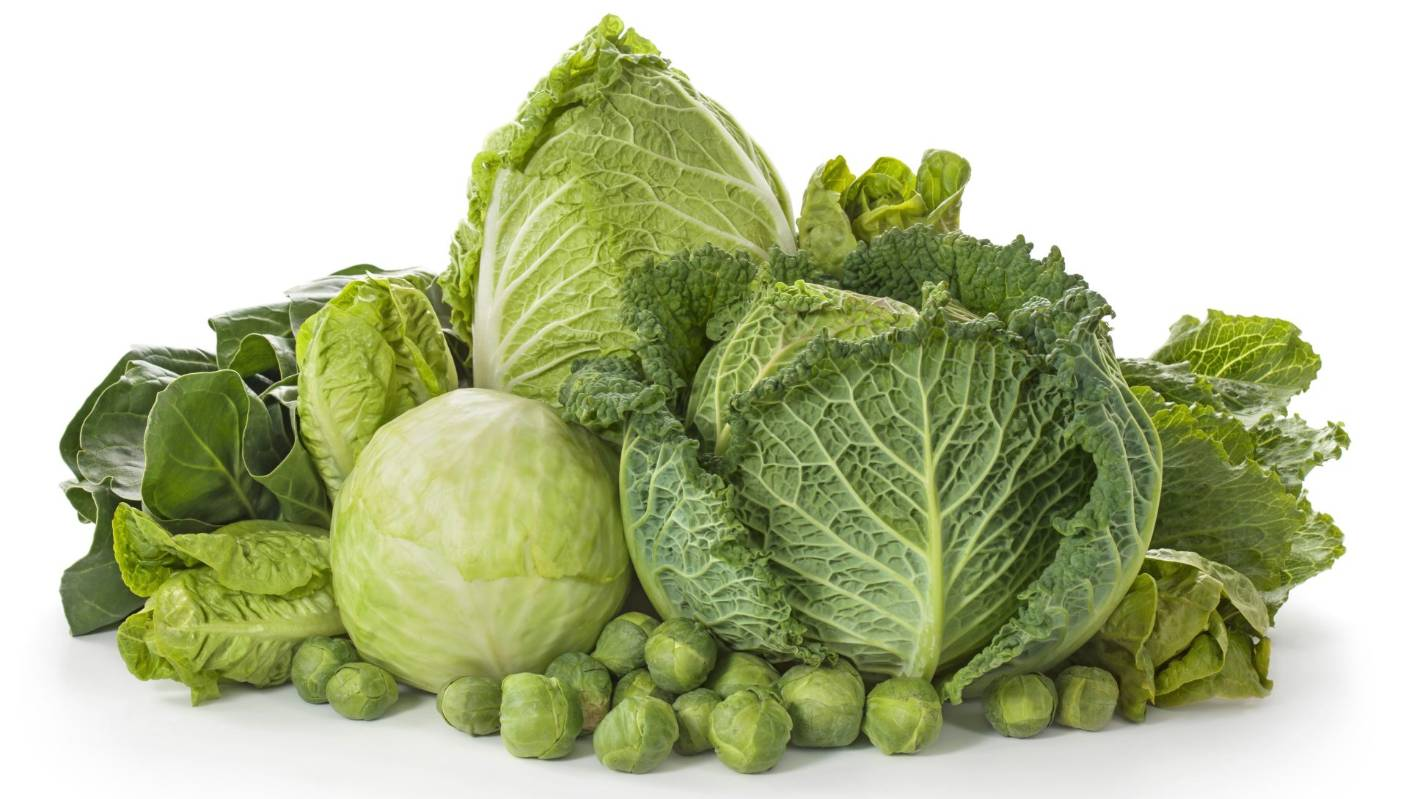 How to grow    cabbages | Stuff co nz