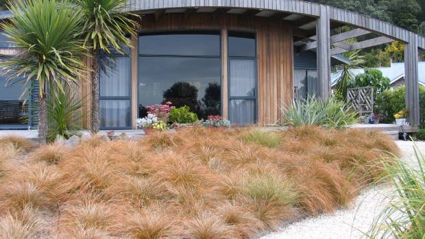 Growing carex as an alternative to grass for Low maintenance garden nz