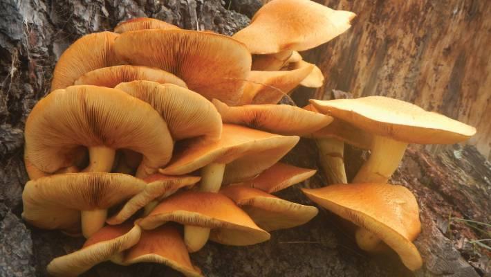 Orange Fungi Nz