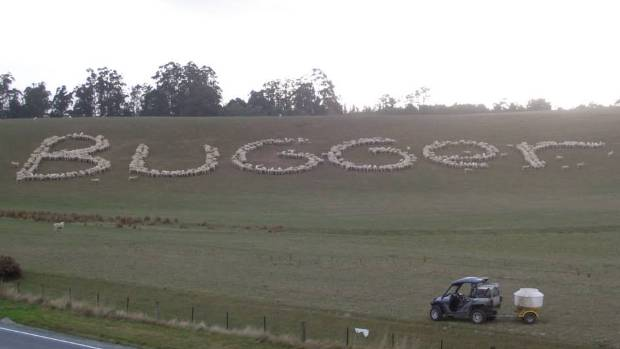 Mike Bowler's sheep are saying what many North Canterbury farmers are thinking.