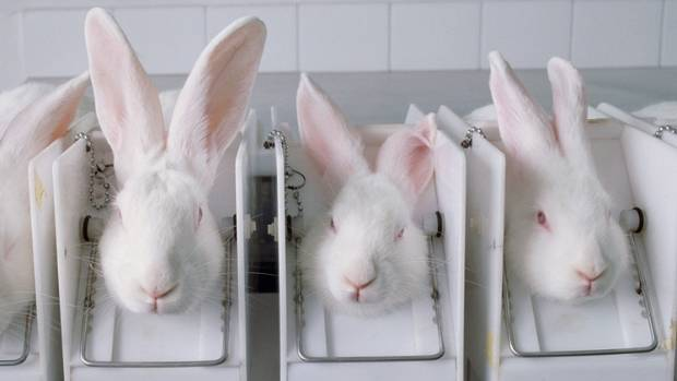 The New Zealand Anti-Vivisection Society is calling for a change to government regulations that support Draize testing.