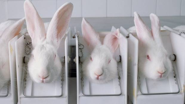 Animal rights campaigners said the Draize test left some rabbits with such badly irritated eyes they had to be killed.