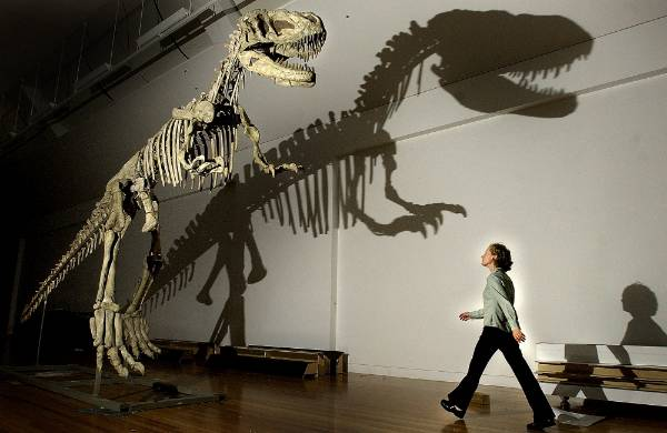 Te Papa's Dinosaurs from China exhibit in 2003 - staff member Vicki Conner walks past the skeleton of a ...