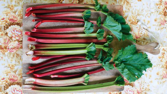 The Ultimate Guide To Growing Rhubarb Stuffconz