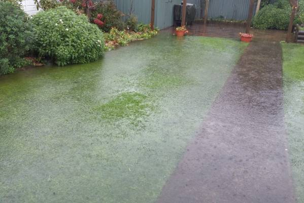 Elizabeth James sent in this picture of her backyard in Tainui, Dunedin.