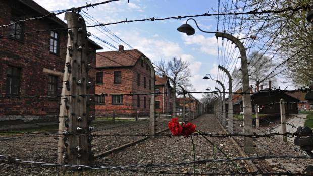 Carnations are placed on the barbed wire in the former Nazi death camp of Auschwitz in Oswiecim, Poland. Reportedly ...