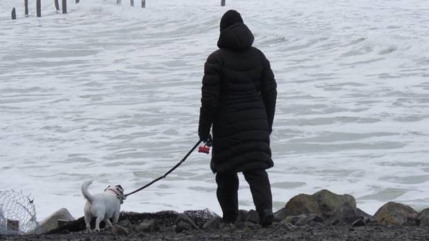 A St Clair resident and her dog search for signs of a different Jack Russell swept out to sea on Sunday.